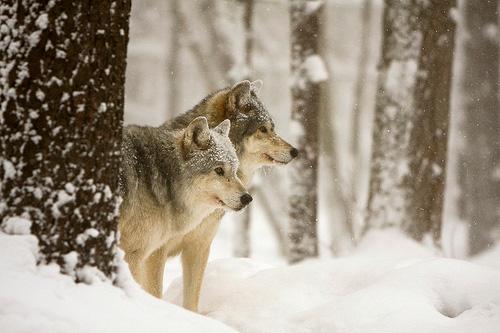 33+1 poze: Animale adorabile prin zapada - Poza 7