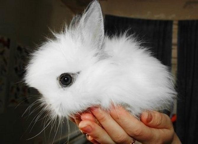 Urechila se intoarce: 20 de poze cu iepuri - Poza 1