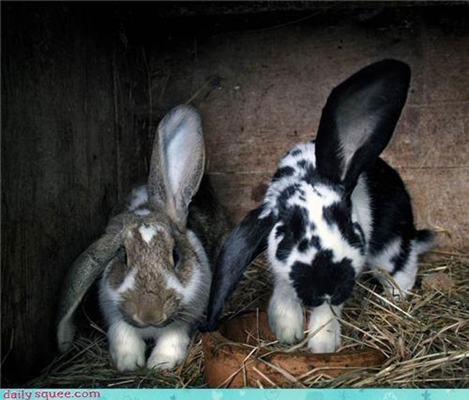 Urechila se intoarce: 20 de poze cu iepuri - Poza 2