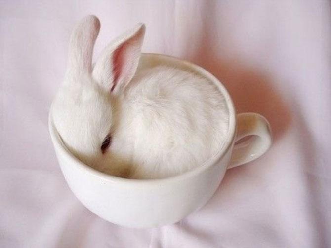 Urechila se intoarce: 20 de poze cu iepuri - Poza 3