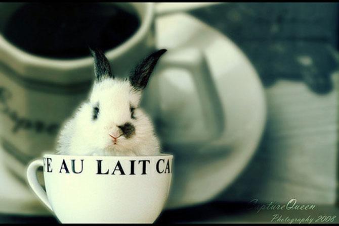 Urechila se intoarce: 20 de poze cu iepuri - Poza 4