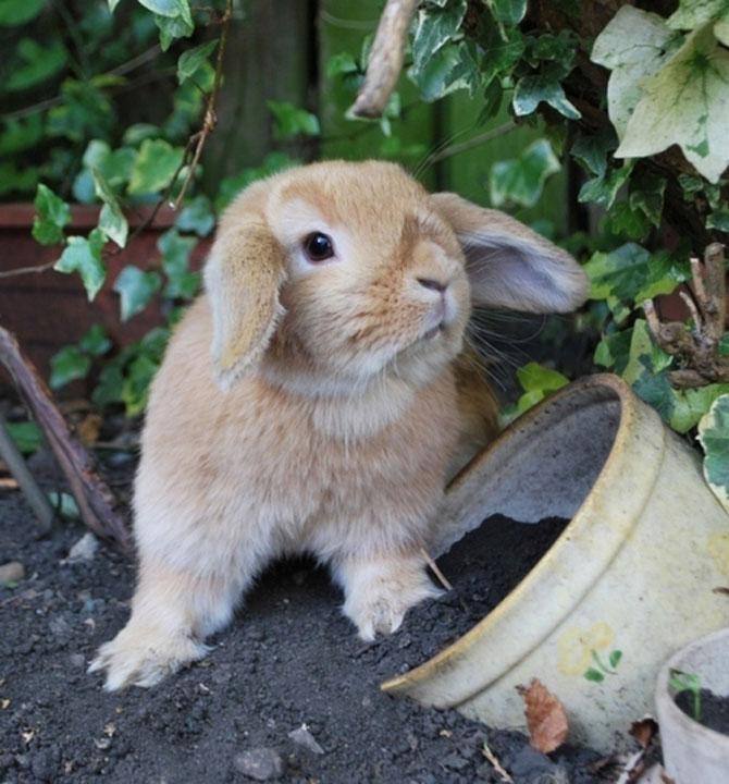 Urechila se intoarce: 20 de poze cu iepuri - Poza 6