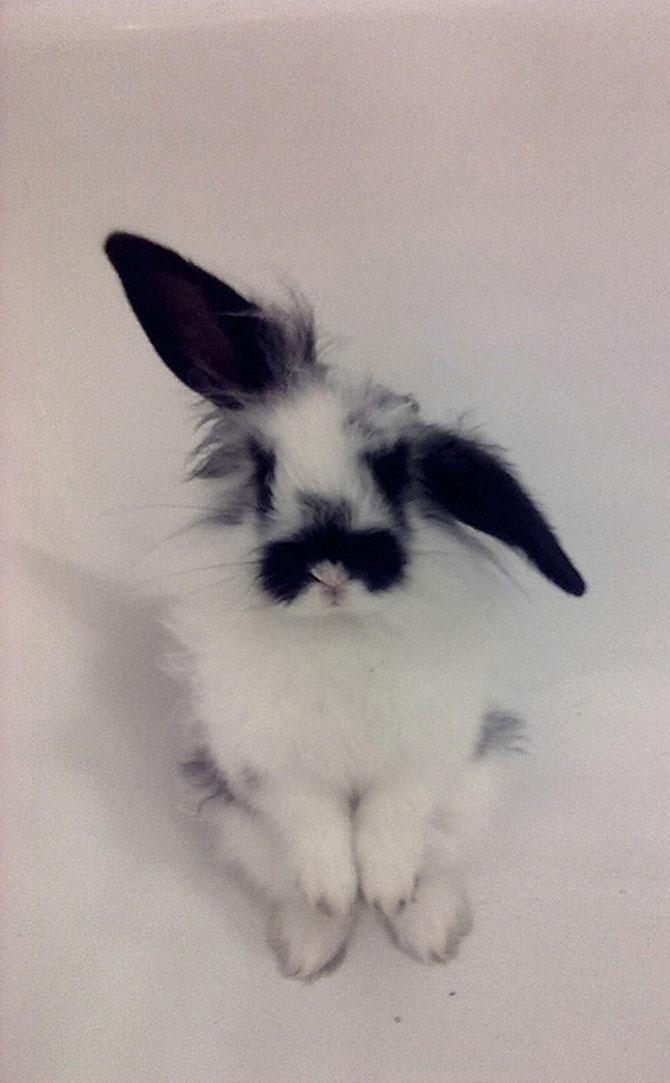 Urechila se intoarce: 20 de poze cu iepuri - Poza 7
