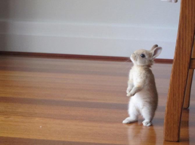Urechila se intoarce: 20 de poze cu iepuri - Poza 8