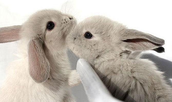 Urechila se intoarce: 20 de poze cu iepuri - Poza 9