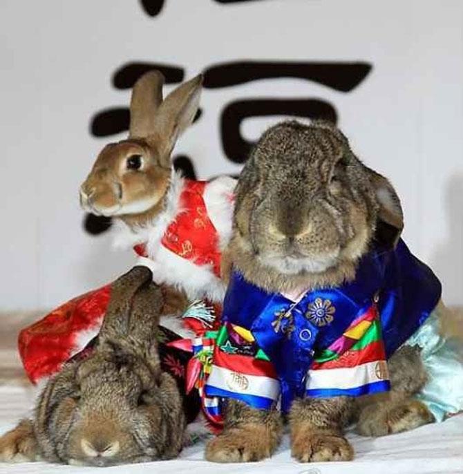 Urechila se intoarce: 20 de poze cu iepuri - Poza 10