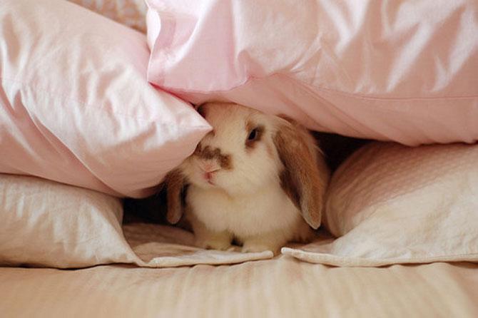 Urechila se intoarce: 20 de poze cu iepuri - Poza 12