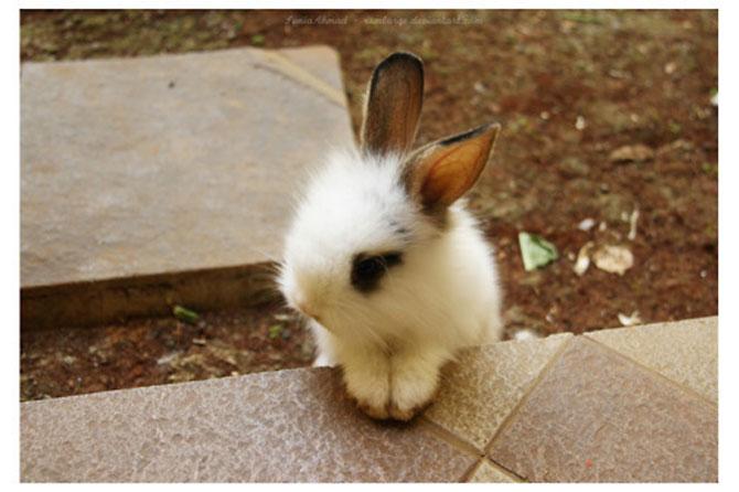 Urechila se intoarce: 20 de poze cu iepuri - Poza 13