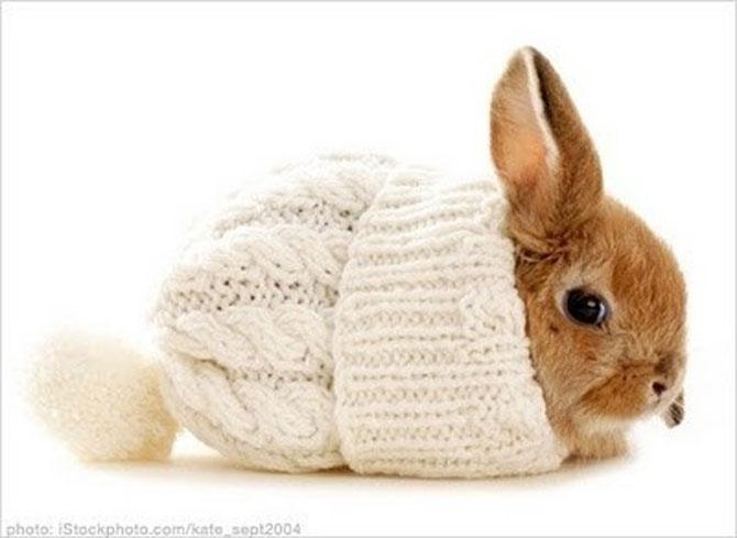 Urechila se intoarce: 20 de poze cu iepuri - Poza 14