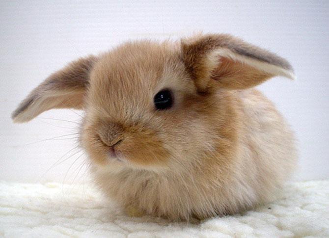 Urechila se intoarce: 20 de poze cu iepuri - Poza 16