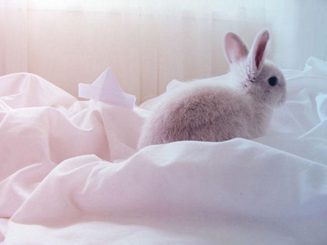 Urechila se intoarce: 20 de poze cu iepuri - Poza 17