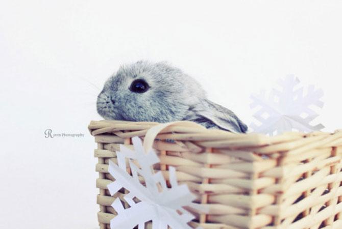 Urechila se intoarce: 20 de poze cu iepuri - Poza 19