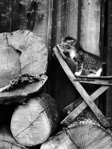 17 poze cu animale fericite - Poza 8