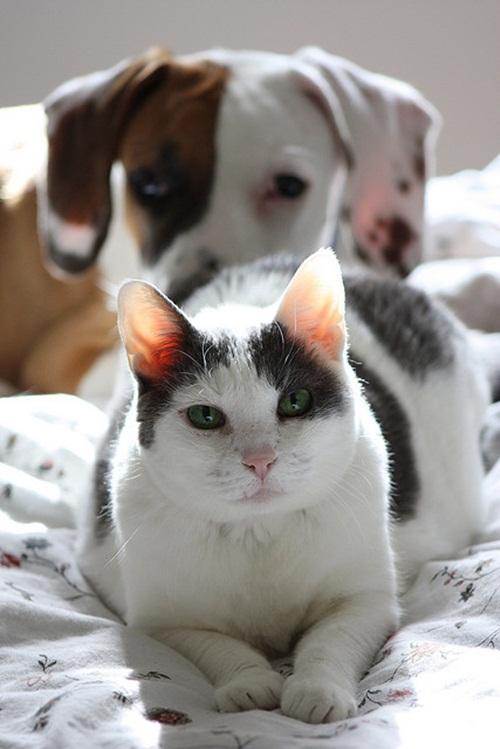 Caini si pisici in 22 de fotografii - Poza 16