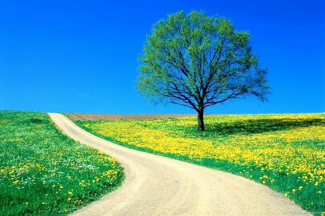 Ai vrea sa mergi pe aceste drumuri? - Poza 2