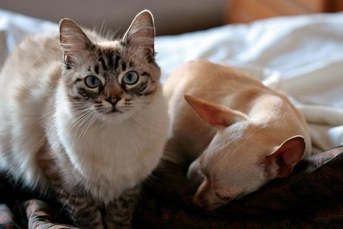 Caini si pisici in 22 de fotografii - Poza 22