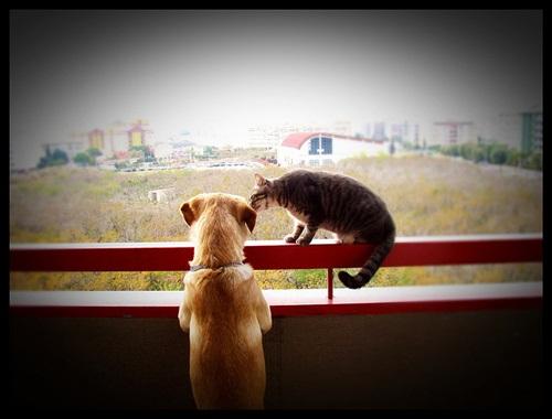Caini si pisici in 22 de fotografii - Poza 17