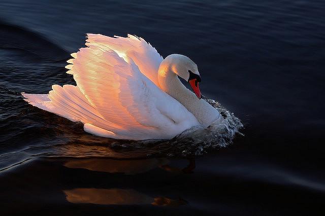 Cand lumina vine din spate: 30 de fotografii grozave! - Poza 27