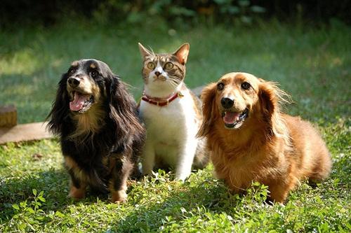 Caini si pisici in 22 de fotografii - Poza 18