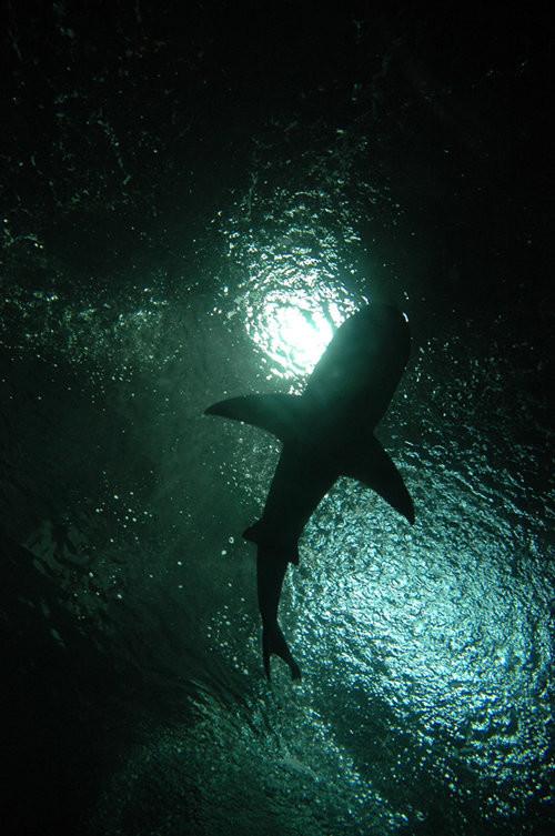 40 vederi splendide ale vietii marine - Poza 24