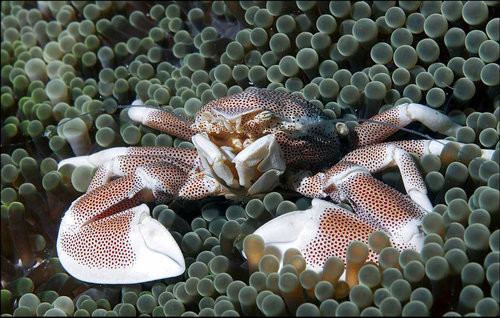 40 vederi splendide ale vietii marine - Poza 25