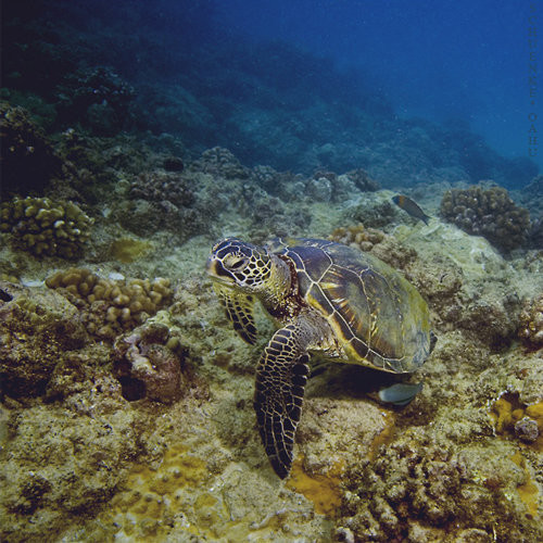 40 vederi splendide ale vietii marine - Poza 26