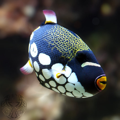 40 vederi splendide ale vietii marine - Poza 27