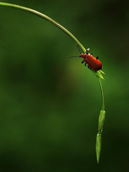Natura la control, in 40 de poze - Poza 1