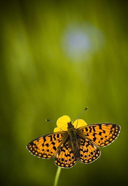 Natura la control, in 40 de poze - Poza 3