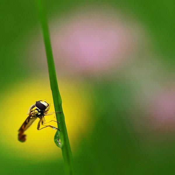 Natura la control, in 40 de poze - Poza 4