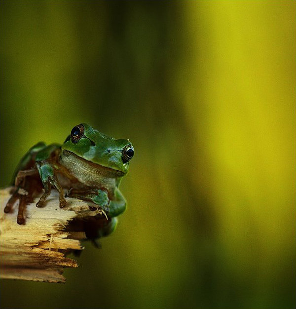 Natura la control, in 40 de poze - Poza 5
