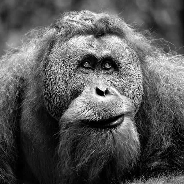 Natura cu personalitate - 42 de fotografii reprezentative - Poza 1