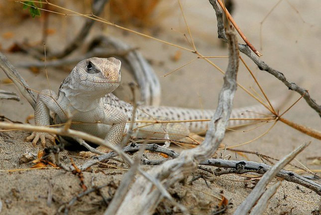 Natura cu personalitate - 42 de fotografii reprezentative - Poza 4