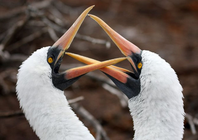 Natura cu personalitate - 42 de fotografii reprezentative - Poza 15
