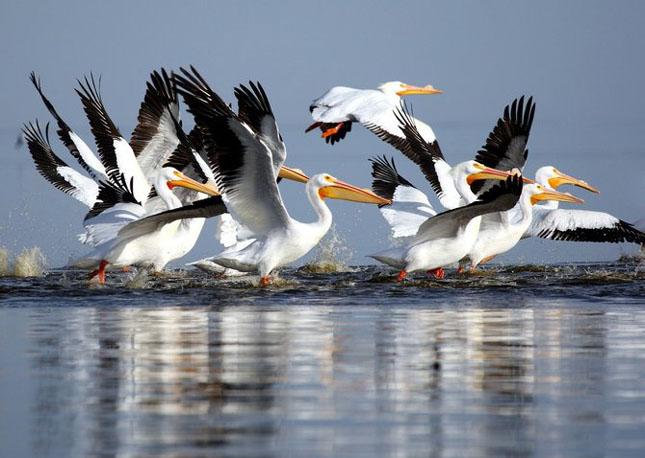 Natura cu personalitate - 42 de fotografii reprezentative - Poza 31