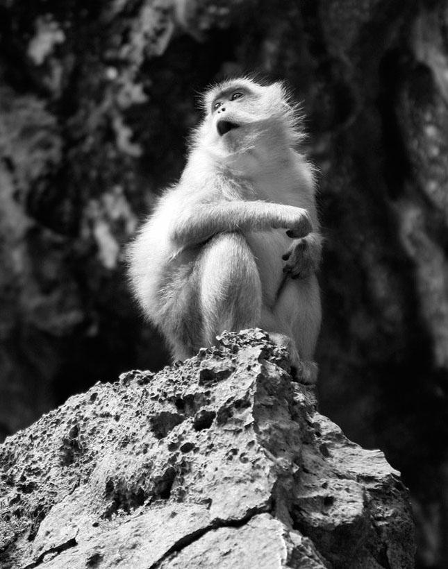 Natura cu personalitate - 42 de fotografii reprezentative - Poza 36