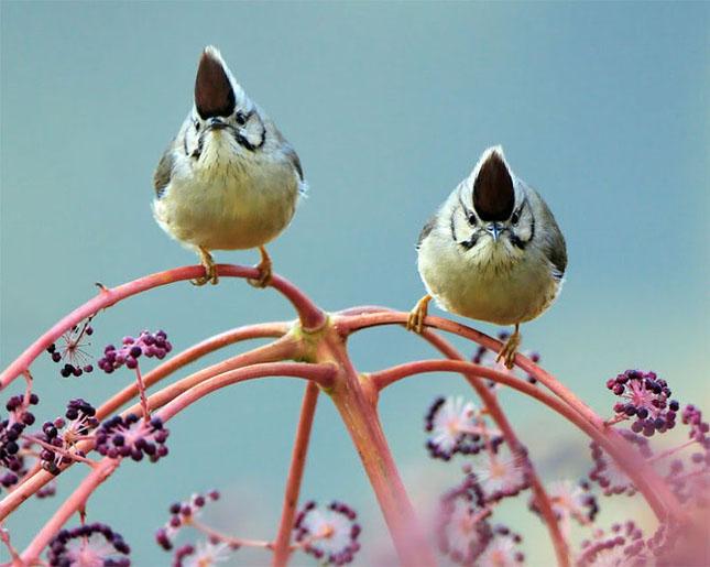 John Soong - Fotografii cu pasarici