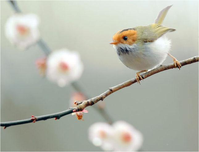 John Soong - Fotografii cu pasari - Poza 8
