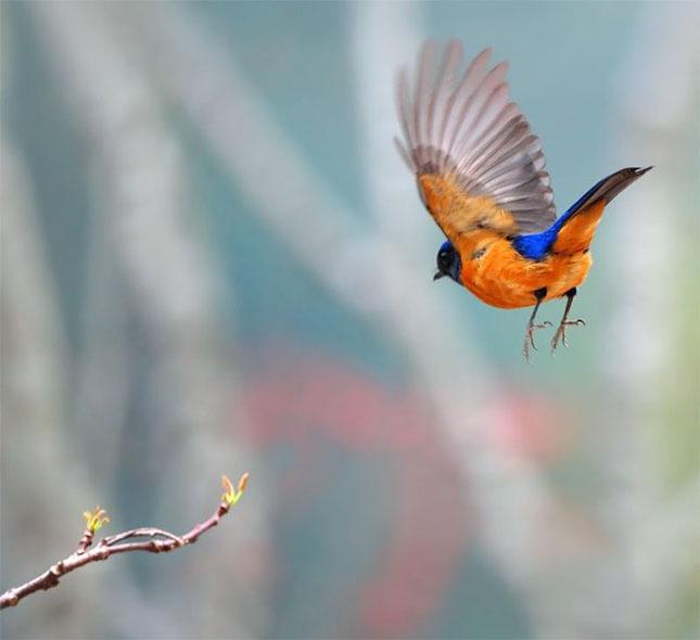 John Soong - Fotografii cu pasari - Poza 16