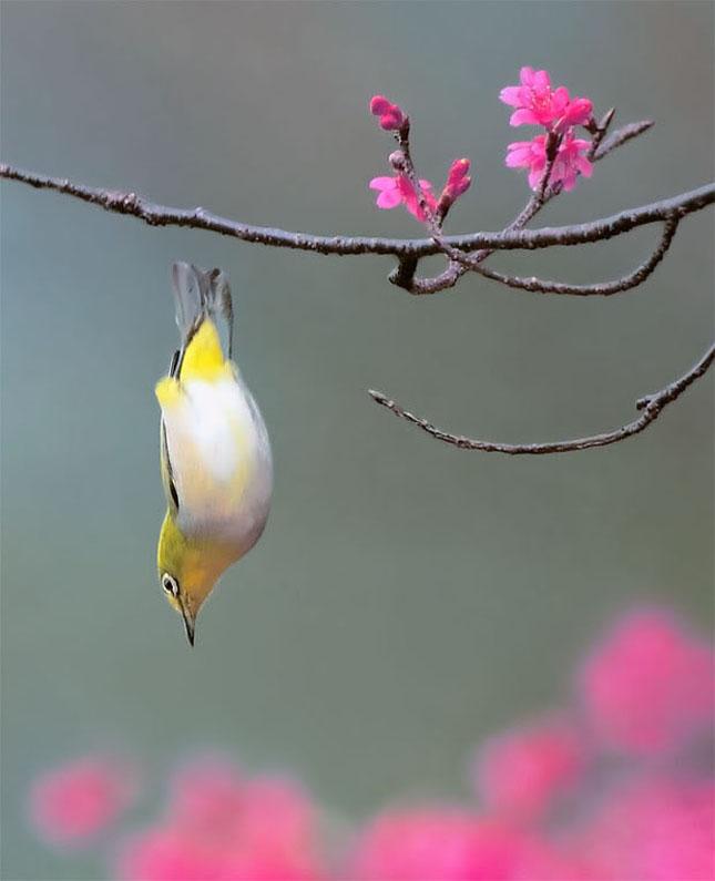 John Soong - Fotografii cu pasari - Poza 19