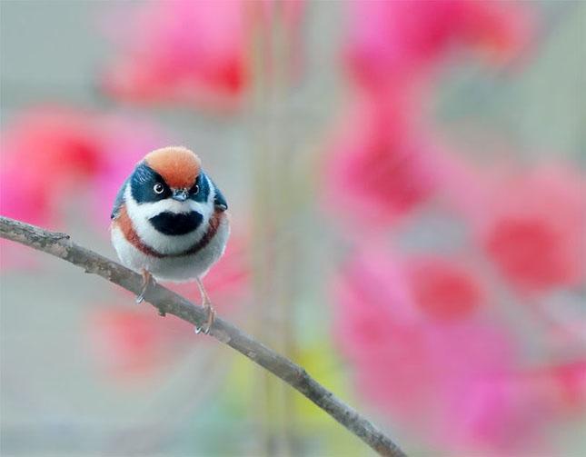 John Soong - Fotografii cu pasari - Poza 23
