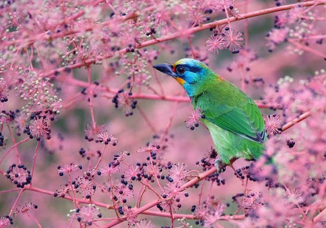 John Soong - Fotografii cu pasari - Poza 29