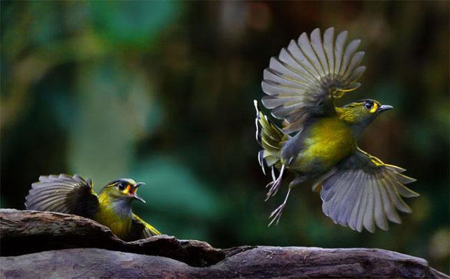 John Soong - Fotografii cu pasari - Poza 40