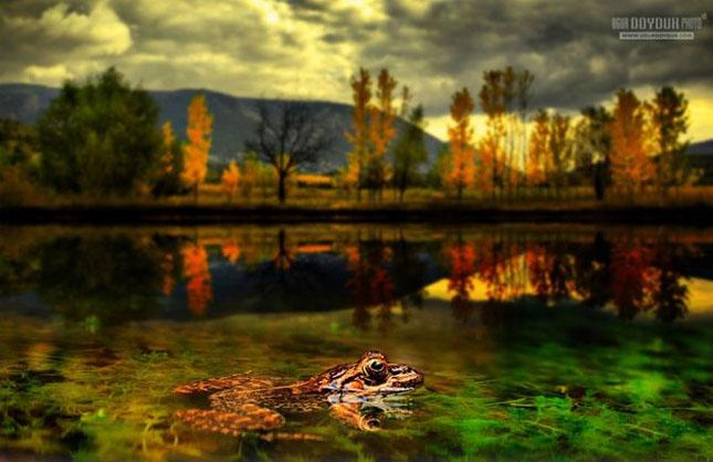 Natura sub lupa lui Ugur Doyduk