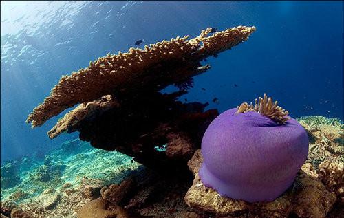 40 vederi splendide ale vietii marine - Poza 29