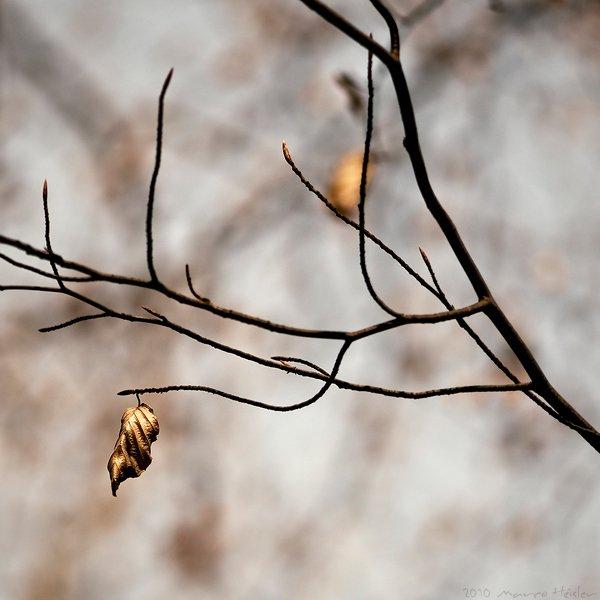 Fotograful Marco Heisle