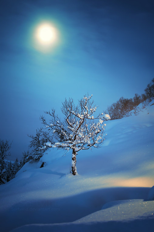 Noi fotografii superbe semnate Sortvind - Poza 1