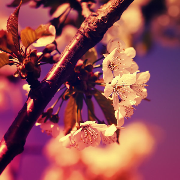 Noi fotografii superbe semnate Sortvind - Poza 6
