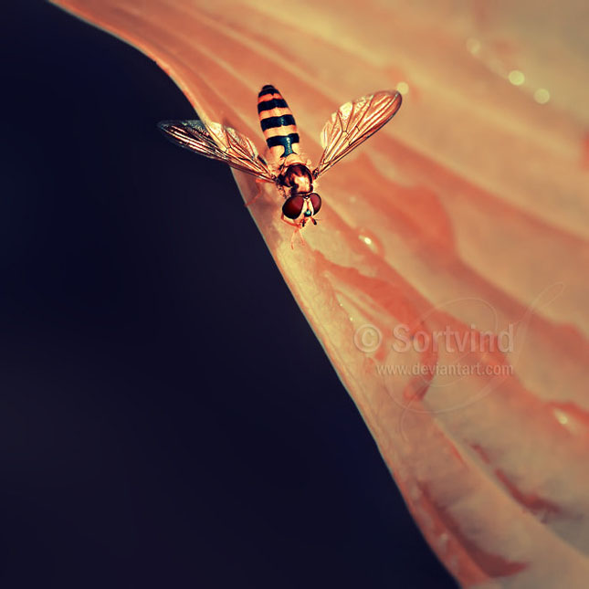 Noi fotografii superbe semnate Sortvind - Poza 14