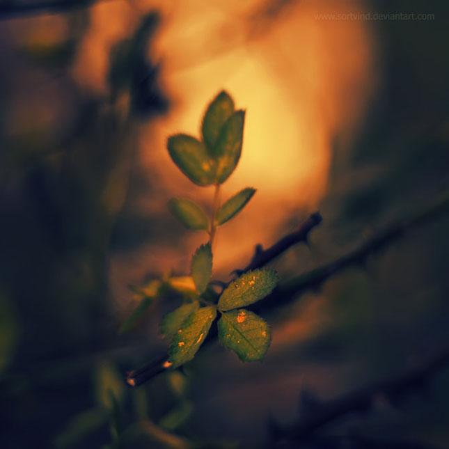 Noi fotografii superbe semnate Sortvind - Poza 15